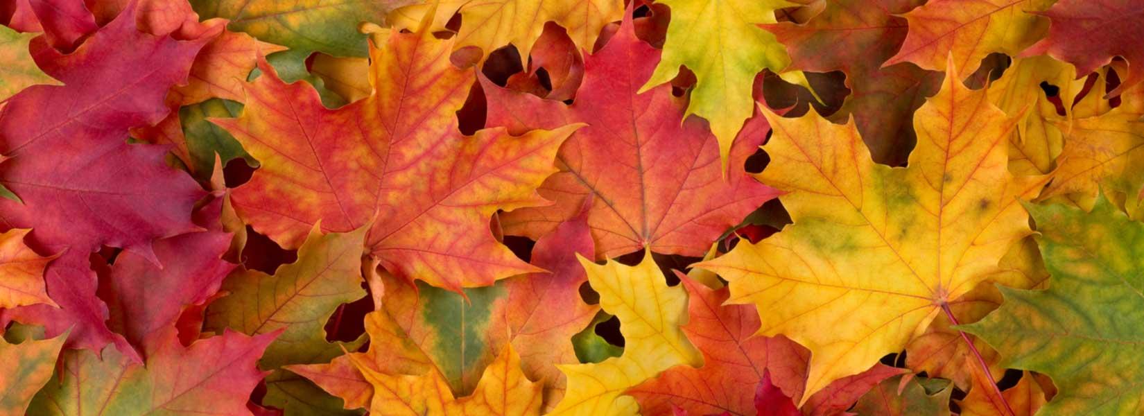 HVAC Maintenance Tips For The Fall Season