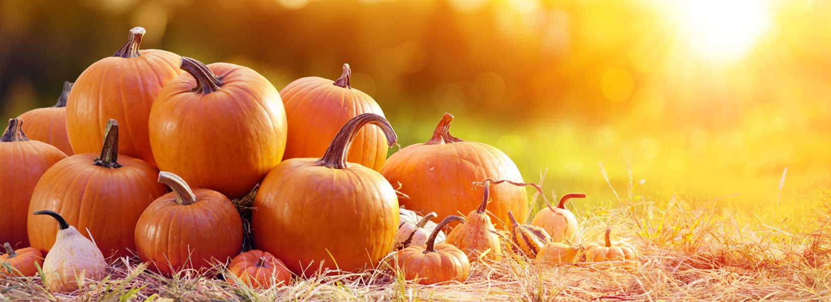 Energy Saving Tips For The Fall Season